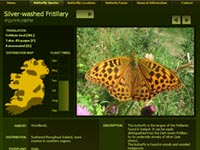 sample of butterfly species page
